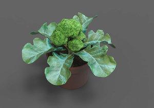 3D pot broccoli