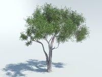 3D olive model
