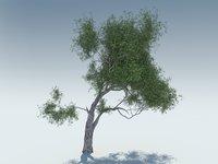 3D tree olive