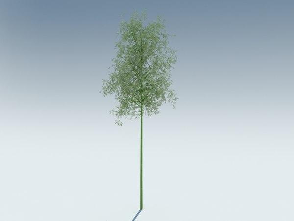 sagano bamboo 3D model