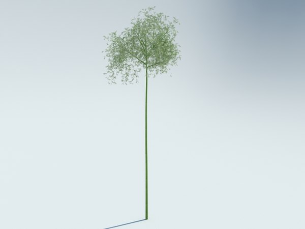 3D model sagano bamboo