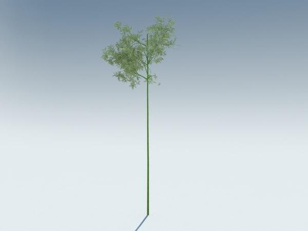 sagano bamboo 3D