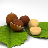 3D model hazelnut nut hazel