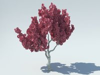 sakura 3D model