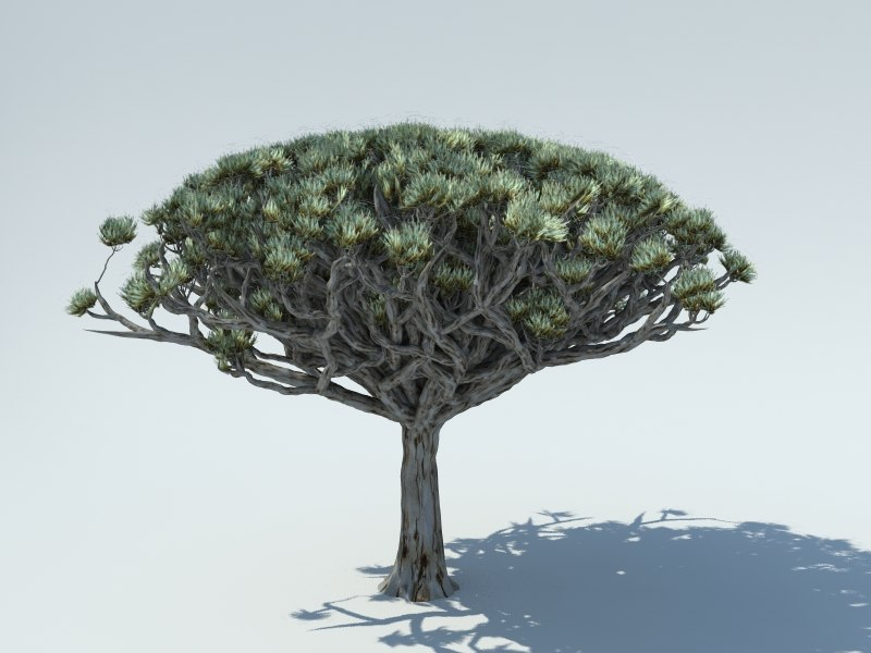 3D socotra dragon blood