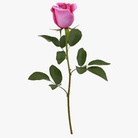 3D rose pink -