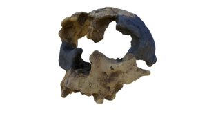 3D human skulls homo antecessor