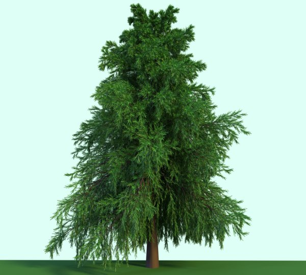 3D evergreen tree