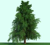 Tree Evergreen Realistic