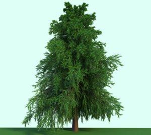 3D evergreen tree