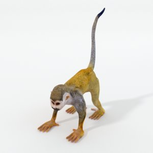 3D squirrel monkey