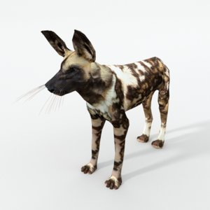 african hunting dog 3D