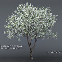 3D garden tree cherry flowering