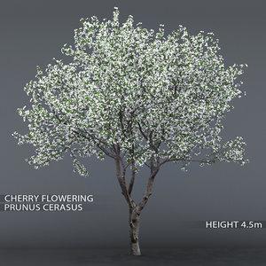 3D garden tree cherry flowering