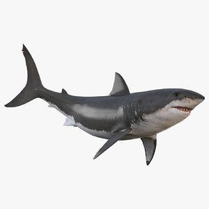 3D shark animation white