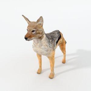 jackal model
