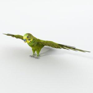 parakeet model