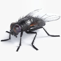 3D realistic housefly