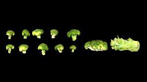 3D broccoli model