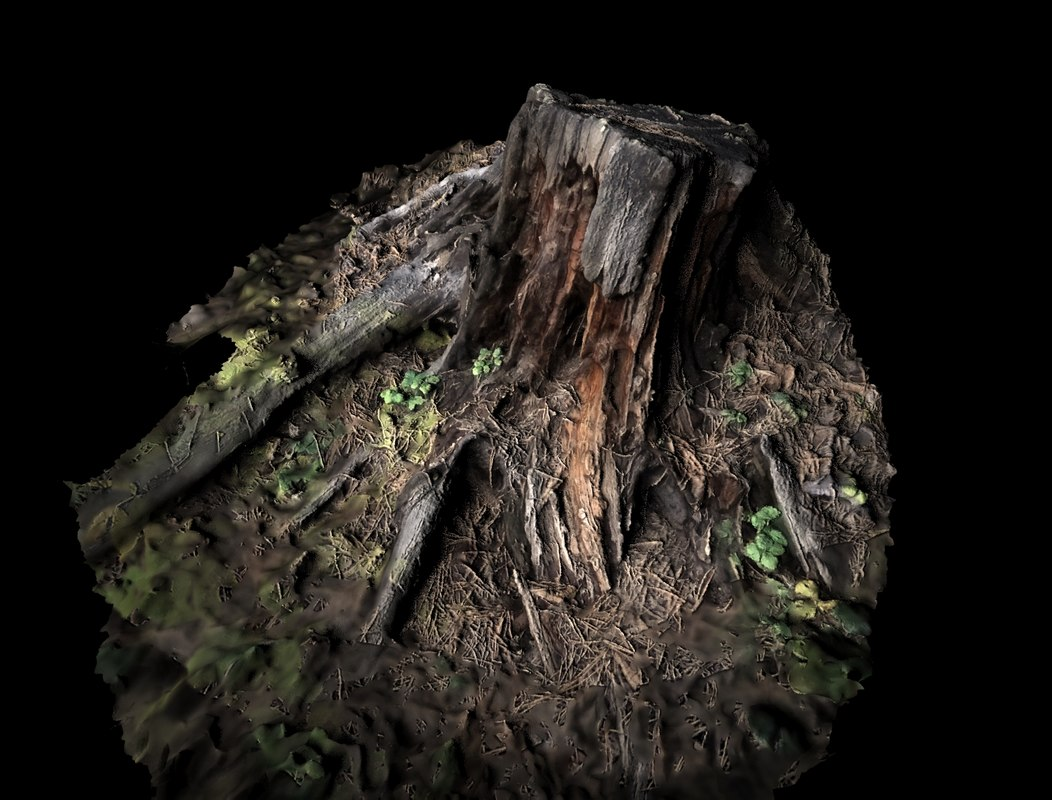 realistic stump 3D model