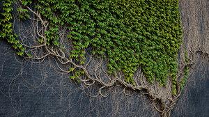 3D archicg plants ivywalls 1 model