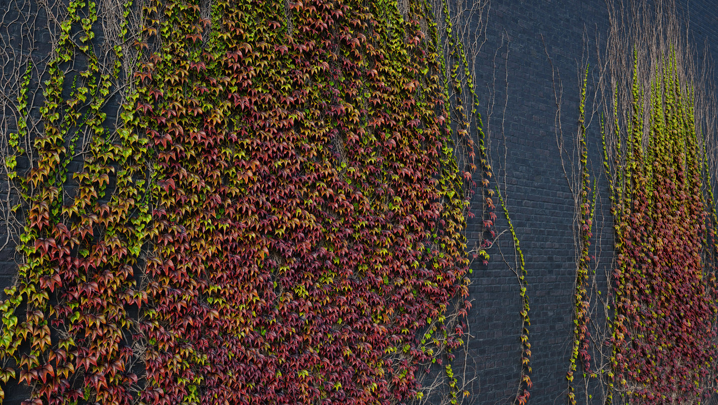 archicg plants ivywalls 1 3D model