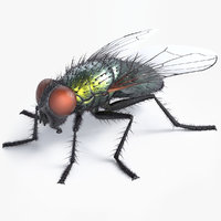 Realistic Green Fly