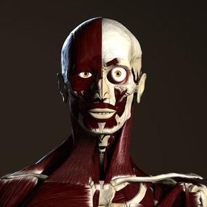 3d ma male skeleton