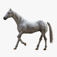 White Horse (Rigged)(1)