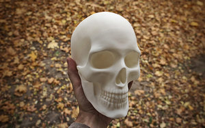 anatomically correct human skull 3D