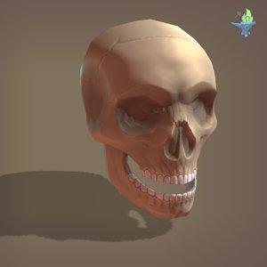 3D cranium skull model