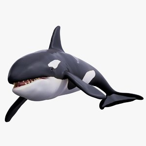 3D killer whale rigged
