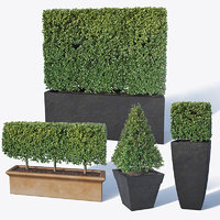 3D boxwood bush flowerpots model
