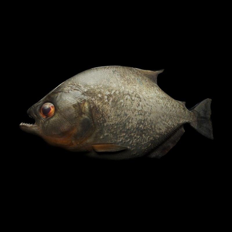 piranha rigged 3D