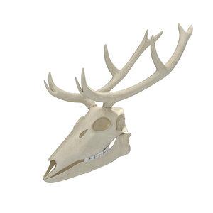 3D deer skeleton skull