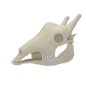 3D giraffe skeleton skull