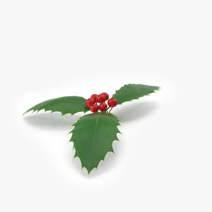 holly plant nature 3D model