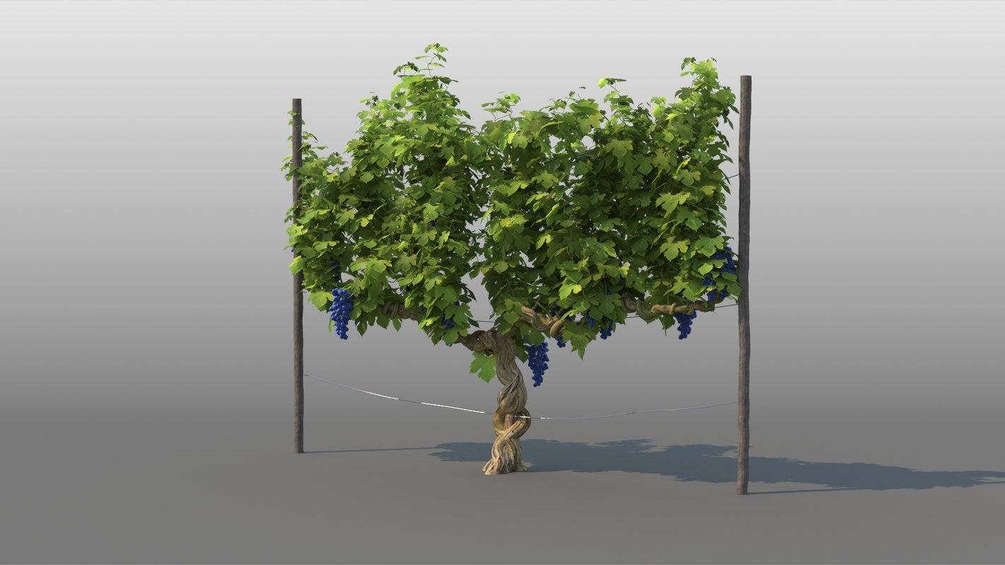 3D model vineyard vine