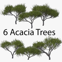 3D acacia pack tree bark