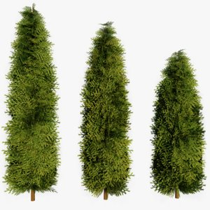 3D thuja occidentalis pack model