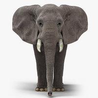 3d model african elephant