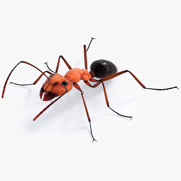 realistic ant 3D model