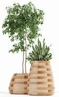 3D plants 129 indigenus tuber model