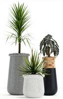 plants 131 indigenus soma model