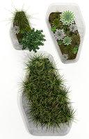 plants 132 indigenus steen 3D