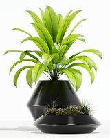 3D plants 133
