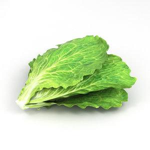 3D model lettuce vegetable food