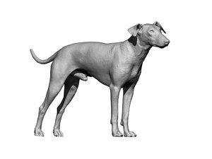3D terrier