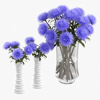 3D realistic violet asters model