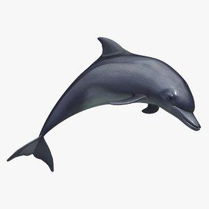 3d max dolphin